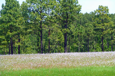 Residential Lots & Land For Sale: Shawn Lane #9
