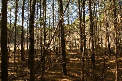 Lake Lure Residential Lots & Land For Sale: (Lot 82) Cozy Lane #Lot 82