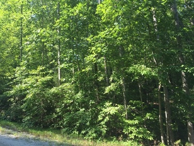 Riverbend Residential Lots & Land For Sale: Cougar Alley