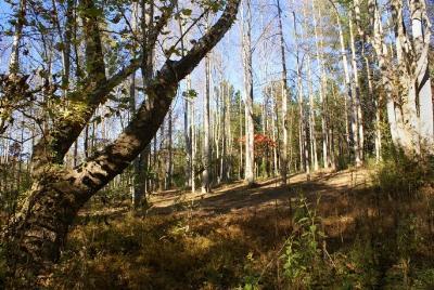 Hearthstone Ridge Residential Lots & Land For Sale: Whitestone Cir #Lot 98