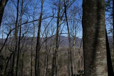 Lake Lure Residential Lots & Land For Sale: (Lot 61) Sweetbriar Rd North #Lot 61