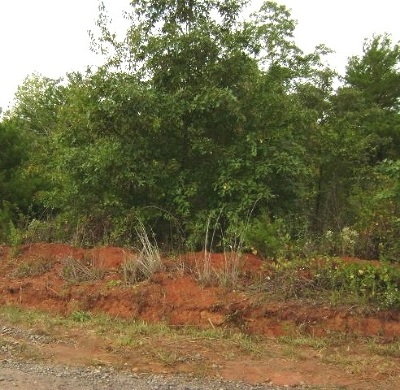 Polk County, Rutherford County Residential Lots & Land For Sale: Andy Drive #Lot 35