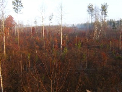 Rutherfordton, Bostic, Forest City, Spindale Residential Lots & Land For Sale: Shenandoah Dr.