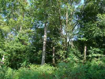 Summit Residential Lots & Land For Sale: 49 Peseco Drive