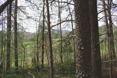Lake Lure Residential Lots & Land For Sale: Westridge Dr #(Lot 87)