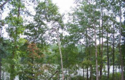 Brunswick County Residential Lots & Land For Sale: 20 Birdsong Road