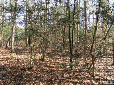 Chatham County Residential Lots & Land For Sale: 86 Keri Anne Court