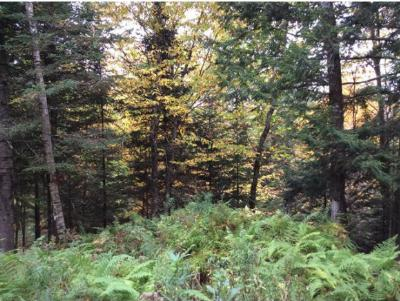 Lyman Residential Lots & Land For Sale: Map 216 Lot 083 Langway Road