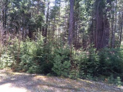 Residential Lots & Land For Sale: Lot #15 Donnas Way