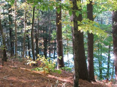 Hopkinton Residential Lots & Land For Sale: Main Street