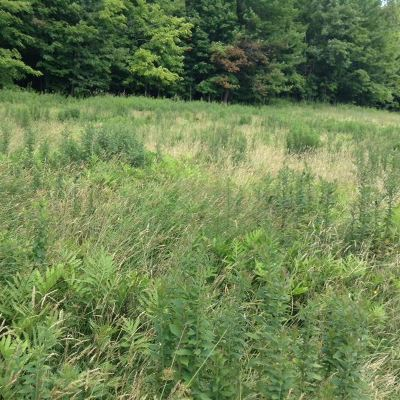 Richford Residential Lots & Land For Sale: 369 Wightman Hill Road
