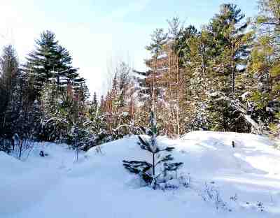 Carroll Residential Lots & Land Active Under Contract: Black Bear Road