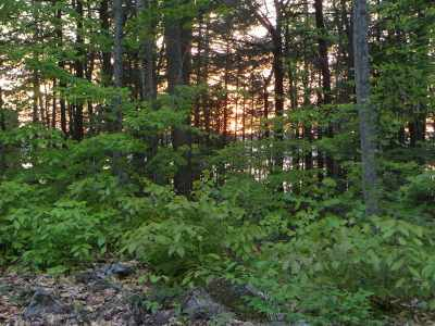 Meredith Residential Lots & Land For Sale: 35 Tiger Trail