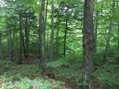Hebron Residential Lots & Land For Sale: Lot 7 Pike Hill Road
