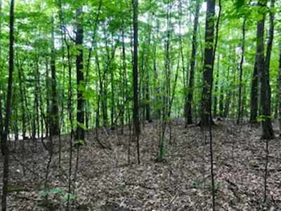 Lyman Residential Lots & Land For Sale: Under The Mountain Road