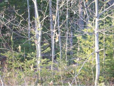 Haverhill Residential Lots & Land For Sale: Lot 85 Allagash Road