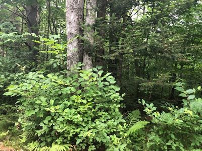 Orford Residential Lots & Land For Sale: Sunday Mountain Extens Road