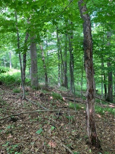 Lisbon Residential Lots & Land For Sale: 40 Lincoln Avenue