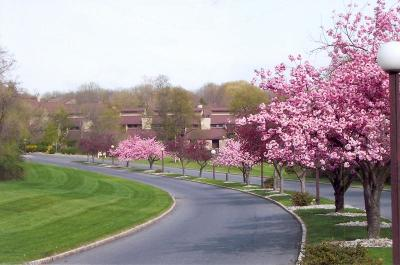 Union Twp. Condo/Townhouse For Sale: 37 Hillside Ct