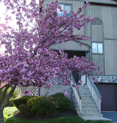 Neptune Township Condo/Townhouse For Sale: 1608 Alpine Trail