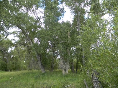 Residential Lots & Land For Sale: McCann North Tr County Road 331