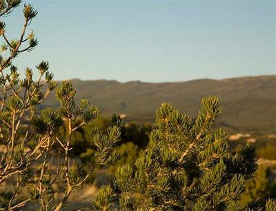 Sandia Park Residential Lots & Land For Sale: 36 Rock Springs Trail