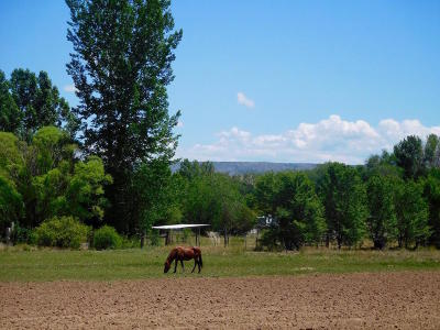 Farm & Ranch For Sale: Lewis Lane