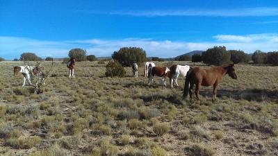 Placitas Residential Lots & Land For Sale: Palomino Lot 2-4-4