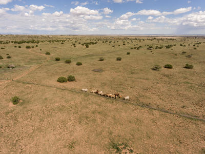 Santa Fe County Farm & Ranch For Sale: 614 State Road 344
