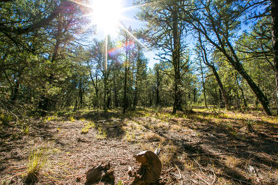 Bernalillo County Residential Lots & Land For Sale: 54 Abbey Road