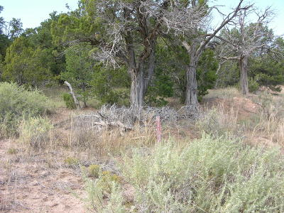Tijeras Residential Lots & Land For Sale: 19 Olivas Place