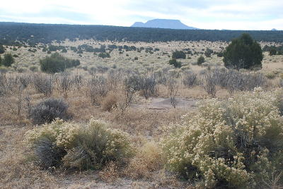 Catron County Residential Lots & Land For Sale: 99 Rigsby Rd - 120 Ac Pasture