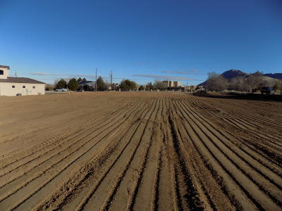 Bernalillo County Residential Lots & Land For Sale: 10650 Signal Avenue NE