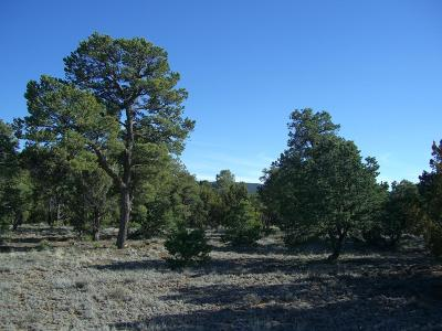 Tijeras Residential Lots & Land For Sale: 34 Mustang Mesa Trail