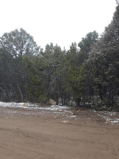 Edgewood Residential Lots & Land For Sale: 22 Chief Joseph Road