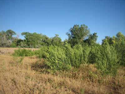 Corrales Residential Lots & Land For Sale: 7648 Corrales Road