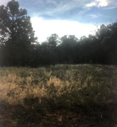 Bernalillo County Residential Lots & Land For Sale: 45 Camino Circular