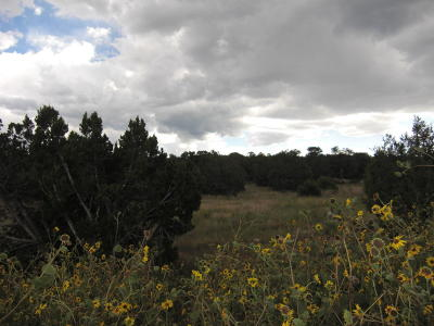 Bernalillo County Residential Lots & Land For Sale: 2 Soaring Hawk Court
