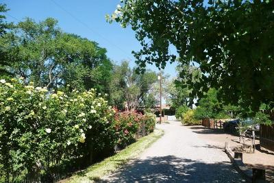 Corrales Single Family Home For Sale: 4813 Corrales Road