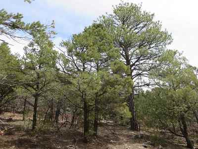 Taos Residential Lots & Land For Sale: Tract G Calle Coyote