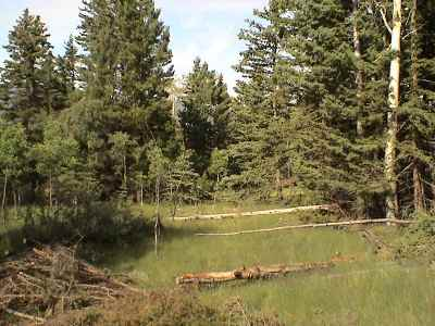 Taos Residential Lots & Land For Sale: 26518 Kit Carson