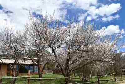 Taos Single Family Home For Sale: 23 Robertos Land