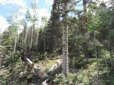 Taos Residential Lots & Land For Sale: Lot 9 Porcupine Road