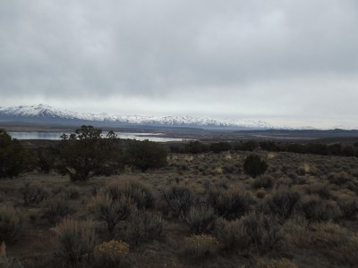 Spring Creek NV Residential Lots & Land For Sale: $175,000
