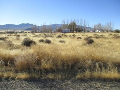 Winnemucca Residential Lots & Land For Sale: E Wagon Wheel