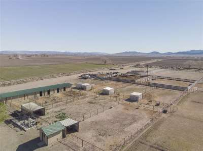 Yerington Farm & Ranch For Sale: 60 Pete Hendrichs