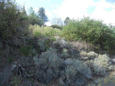 Reno Residential Lots & Land New: Mayberry Drive