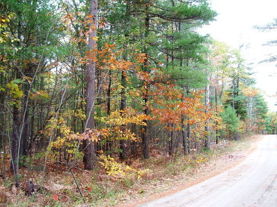 Essex County Residential Lots & Land For Sale: 142 Dogwood Street