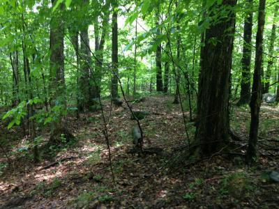 Residential Lots & Land For Sale: Mountain Lane