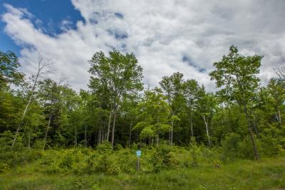 Residential Lots & Land For Sale: 22 Outlook Lane
